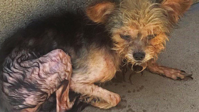 Animals rescued from home covered in their own feces, urine